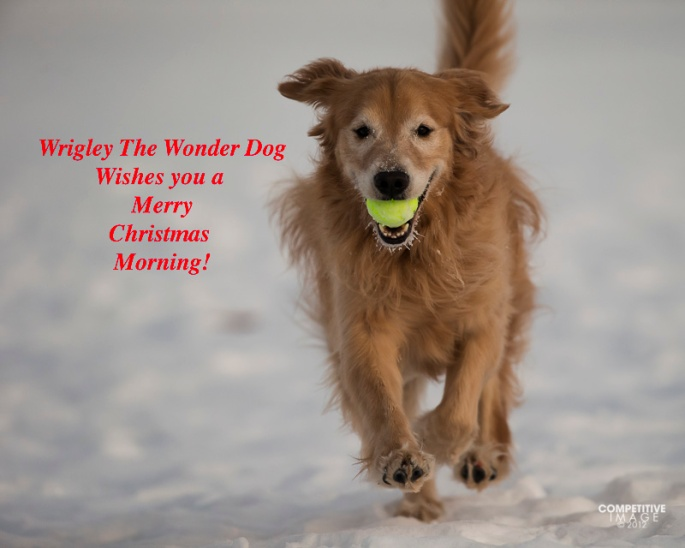 Wrigley The Wonder Dog wishes you a Merry Christmas